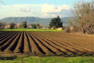 Φορολογία εισοδήματος αγροτικών επιχειρήσεων