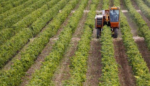 Picture 0 for Τι μπορεί να συμβεί με την κατάσχεση αγροτικών ενισχύσεων για φορολογικές οφειλές