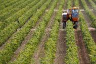 Ποιοι αγρότες και έχοντες αγροτικό εισόδημα, δικαιούνται το αφορόλογητο
